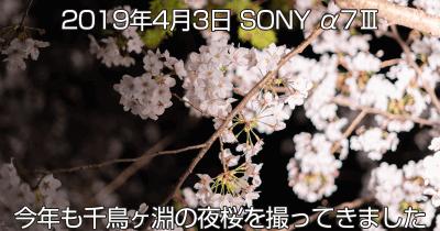 千鳥ヶ淵夜桜